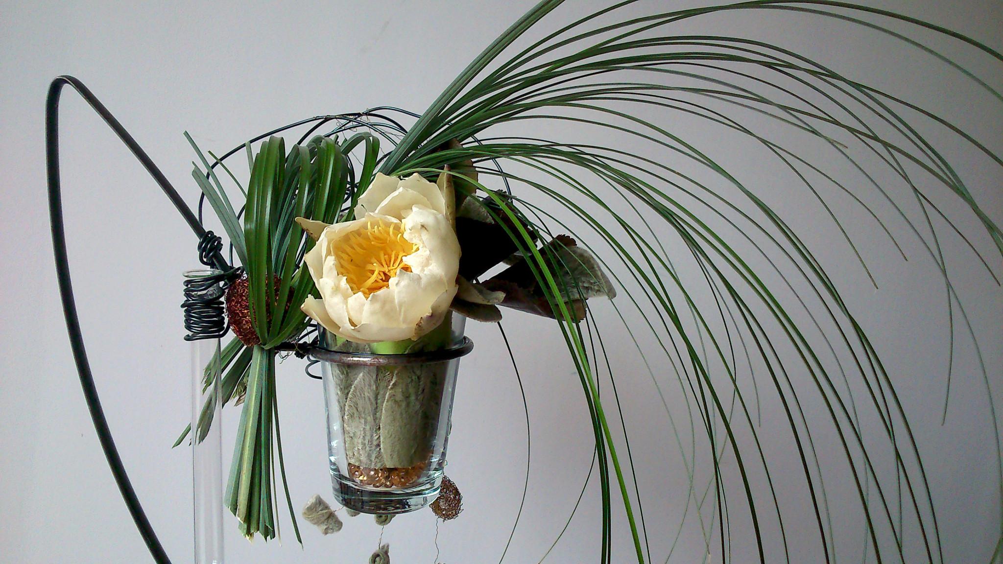 Design Floral : Végétaux stabilisés