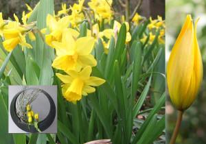 0_Retour Fleurs printemps